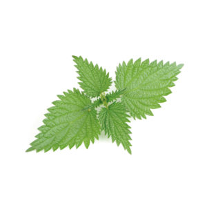 Organic Stinging Nettle  <strong>60 g </strong>