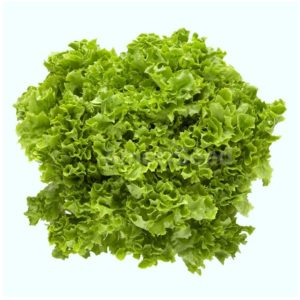 Organic Frilly Butter Lettuce <strong> Loose Head </strong>